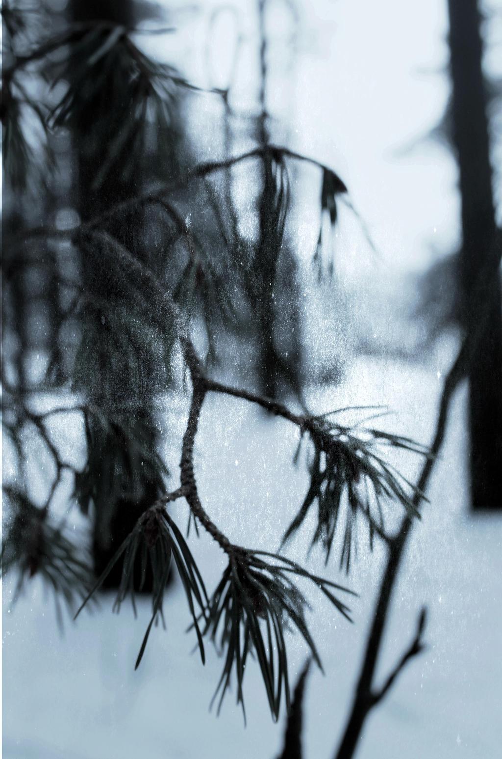 pine by antarctics