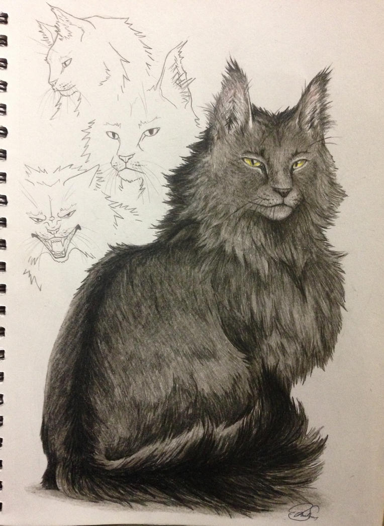 Warrior Cats Graystripe 553109649 on Bob The Builder Ideas On Pinterest