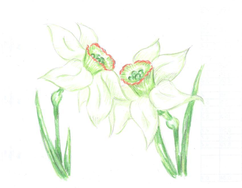 Daffodils by moriganu