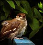 10 Birdier than you