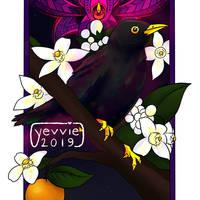 02-08 Western Blackbird by yevvie