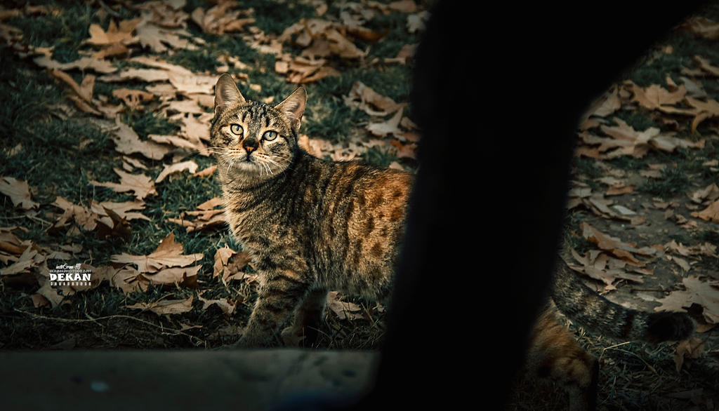 nice cat by DEKANYASSIN6