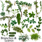 Branches and leaves resource