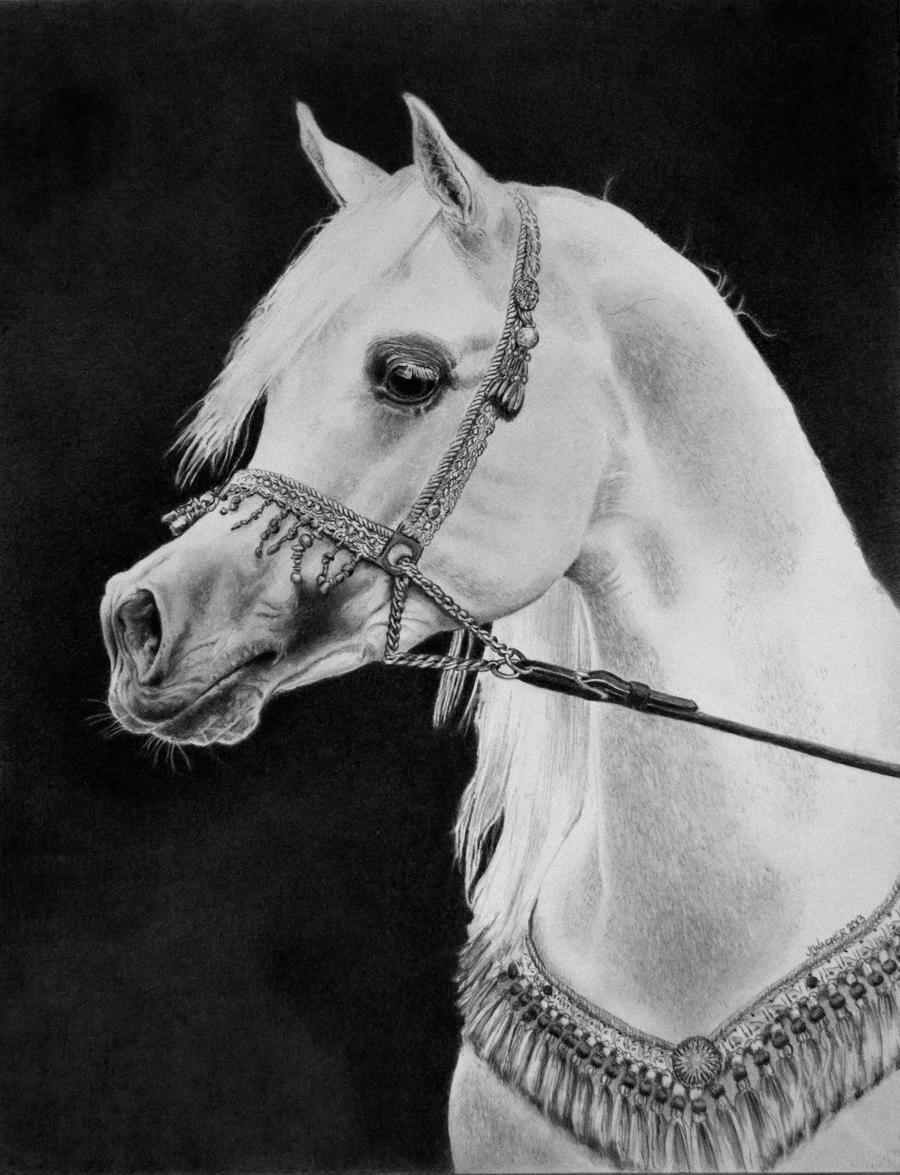 The Arabian by joniwagnerart