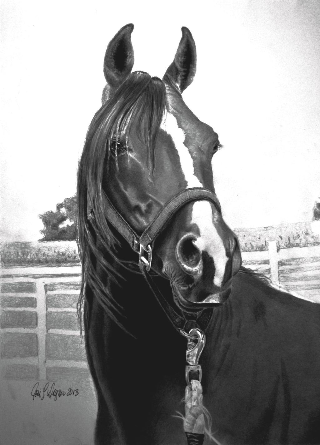 Equine Portrait by joniwagnerart