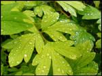 .Raindrops