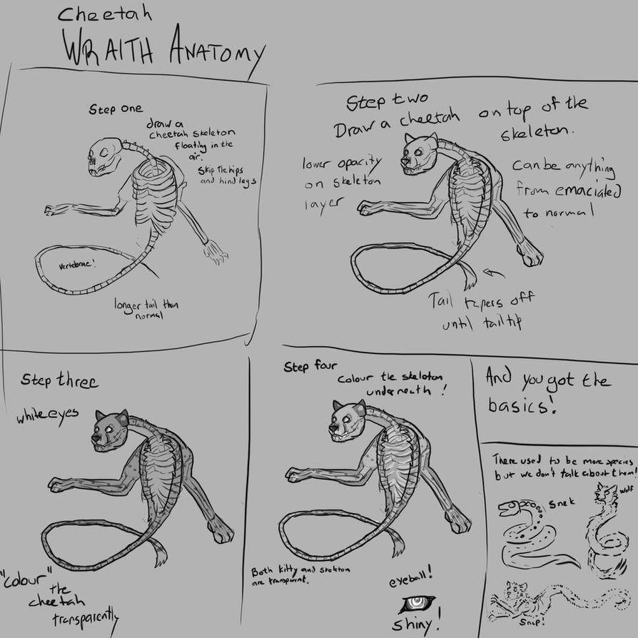 Cheetah wraith Anatomy by timba on DeviantArt