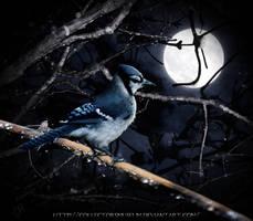 Midnight Song by FuchsiaBud