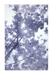 spring by raun