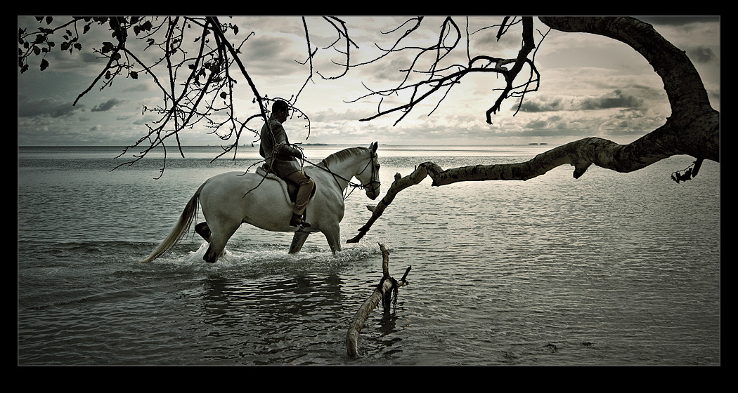 white horse by raun