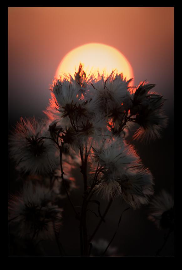 soft sunset by raun