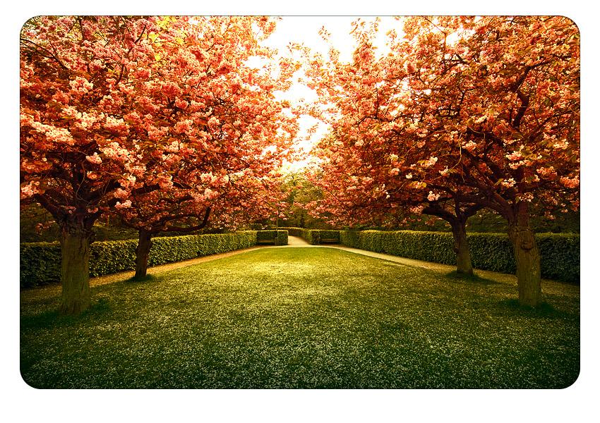 symmetrical cherries