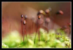 moss by urgentvariety