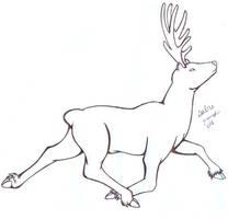 Caribou...