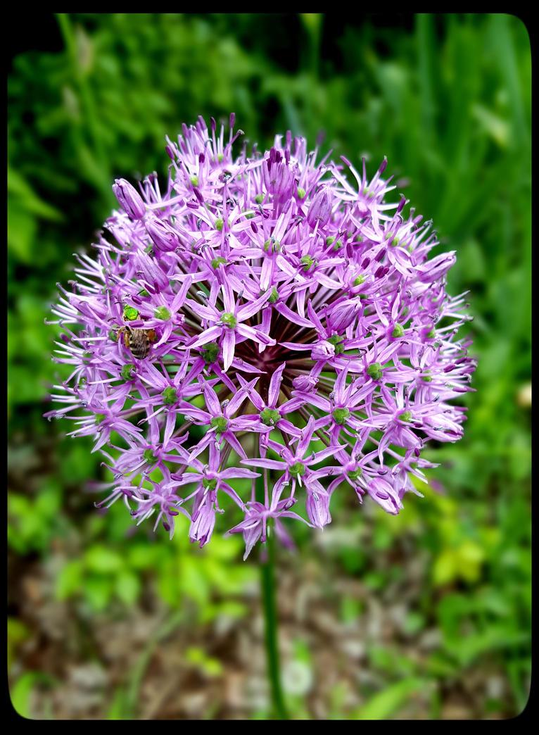 Flower 1 by PrYmO-ART