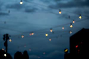 Fireflies of Melbourne