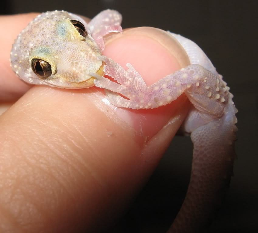 Cute gecko stock by Crysta-stock
