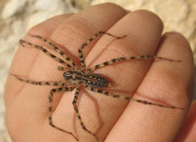 Spider on hand stock by Crysta-stock