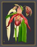 Orchid Vintage on Black Paperboard Background