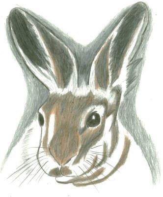 Rabbit drawing by The-Blue-Dragon