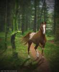 Araap- Forest Delight