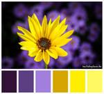 Colours #2