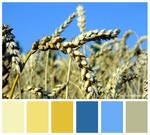 Colours #13