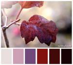 Colours #16