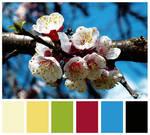 Colours #20