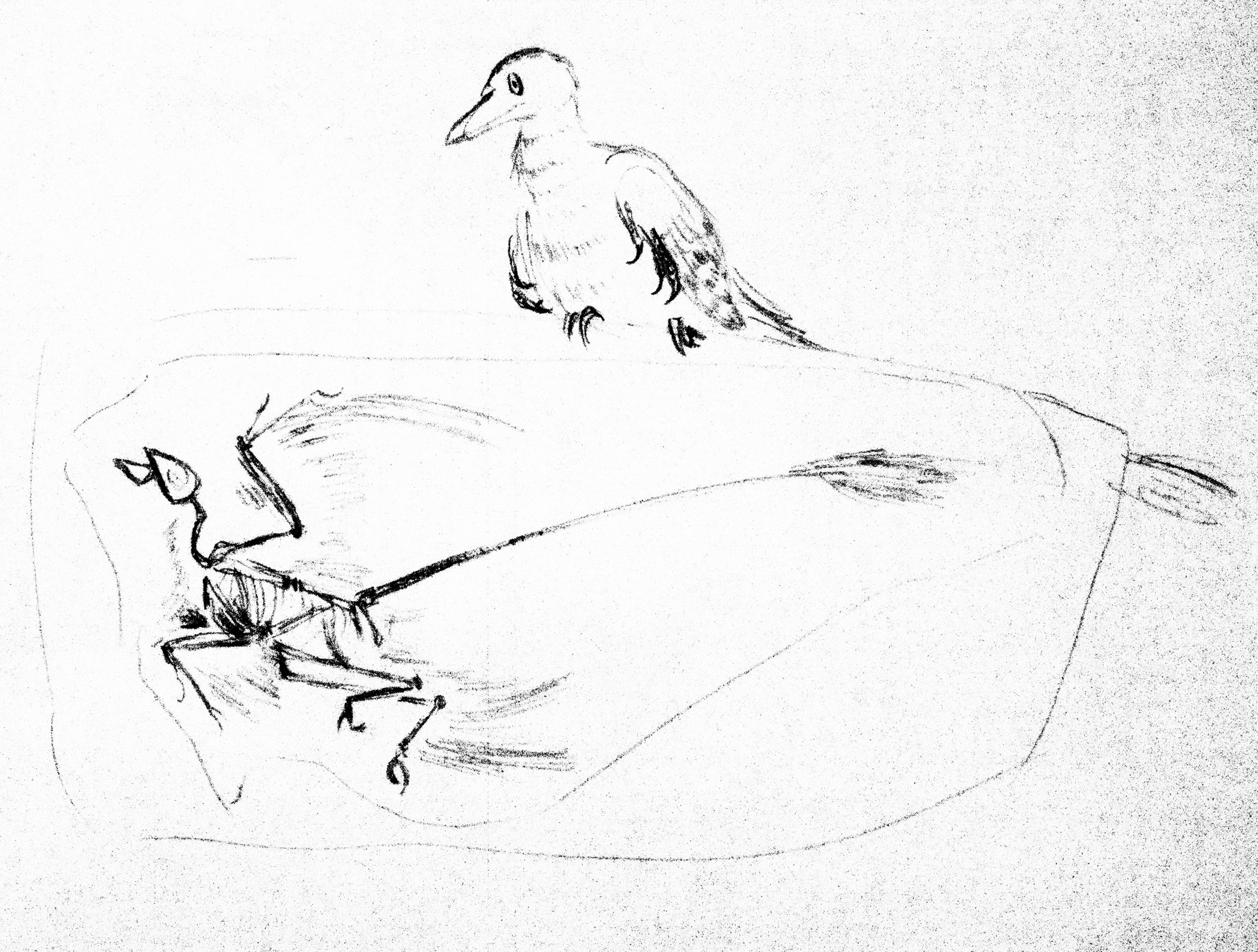 Sinornithosaurus and Microraptor Fossil by Galliraptor on ...