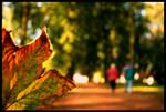 Colors of Autumn .