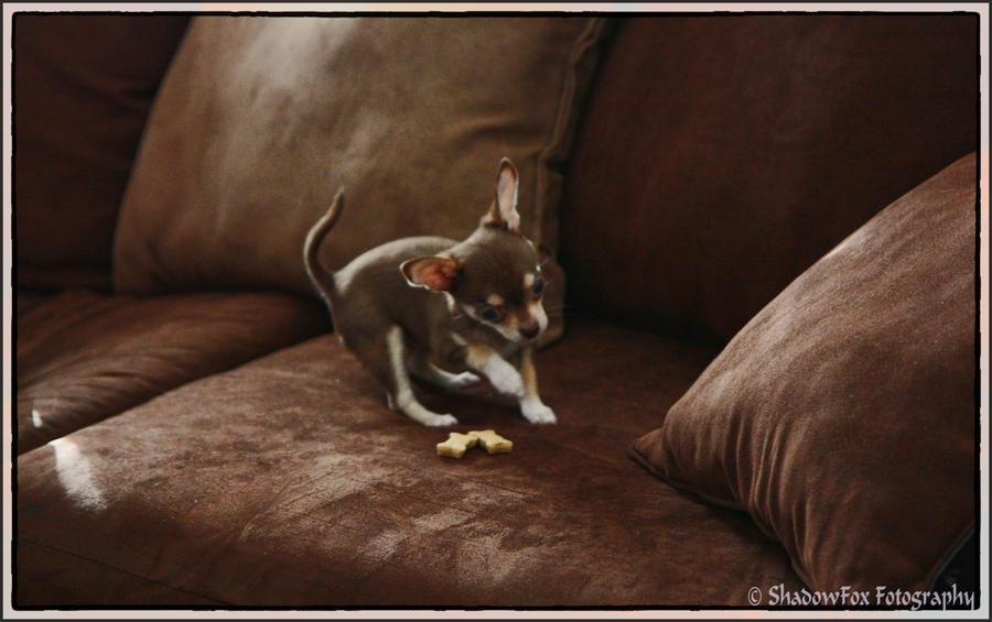Maji svatki za gnjaviti...[Ne zamerite mi...] Dances_with_doggy_biscuits_by_shadowfox205-d4kxdpw