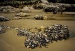 Mussel Shells (analogue) by maxlake2
