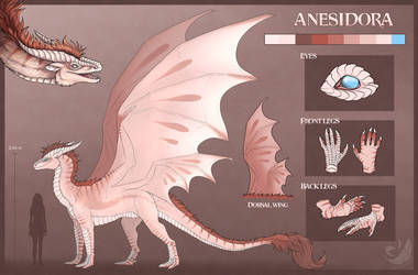 Anesidora ~ Reference Sheet