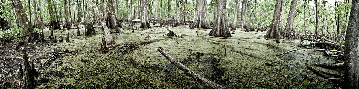 Meeting the Swamp 02