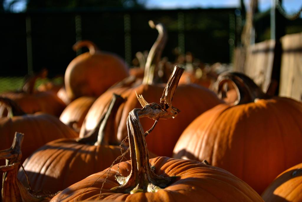 Autumn by gallindz