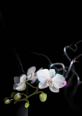dorian gray :: supply of orchids