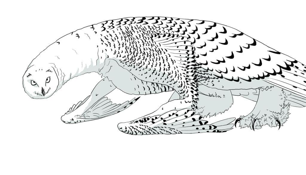 Simple Snowy Owl Drawing