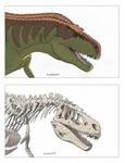 Daspletosaurus head/skull commission