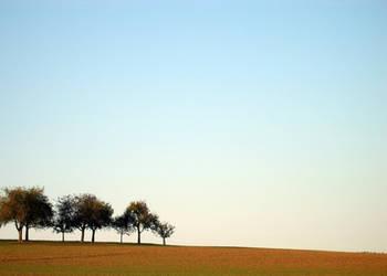 Three Trees by Jhingle