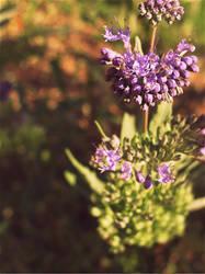Purple Dreams by Jhingle