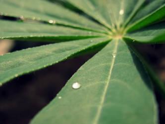 Raindrops... by Jhingle