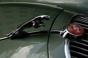 Jaguar by DalMax