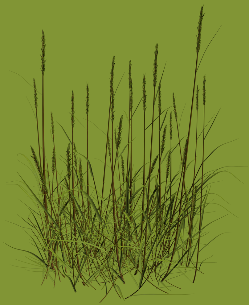 sweet grass chatrooms 4 chatting welcome to sweet home alabama please read the rules on the   spring has sprungthe grass has rizei wonder where the birdies iz.