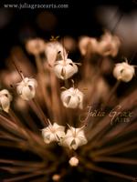 Flower's Glow by JuliaGraceArts