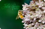 Oh, Honey.. Bee