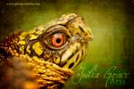 Eastern Box Turtle - Textured
