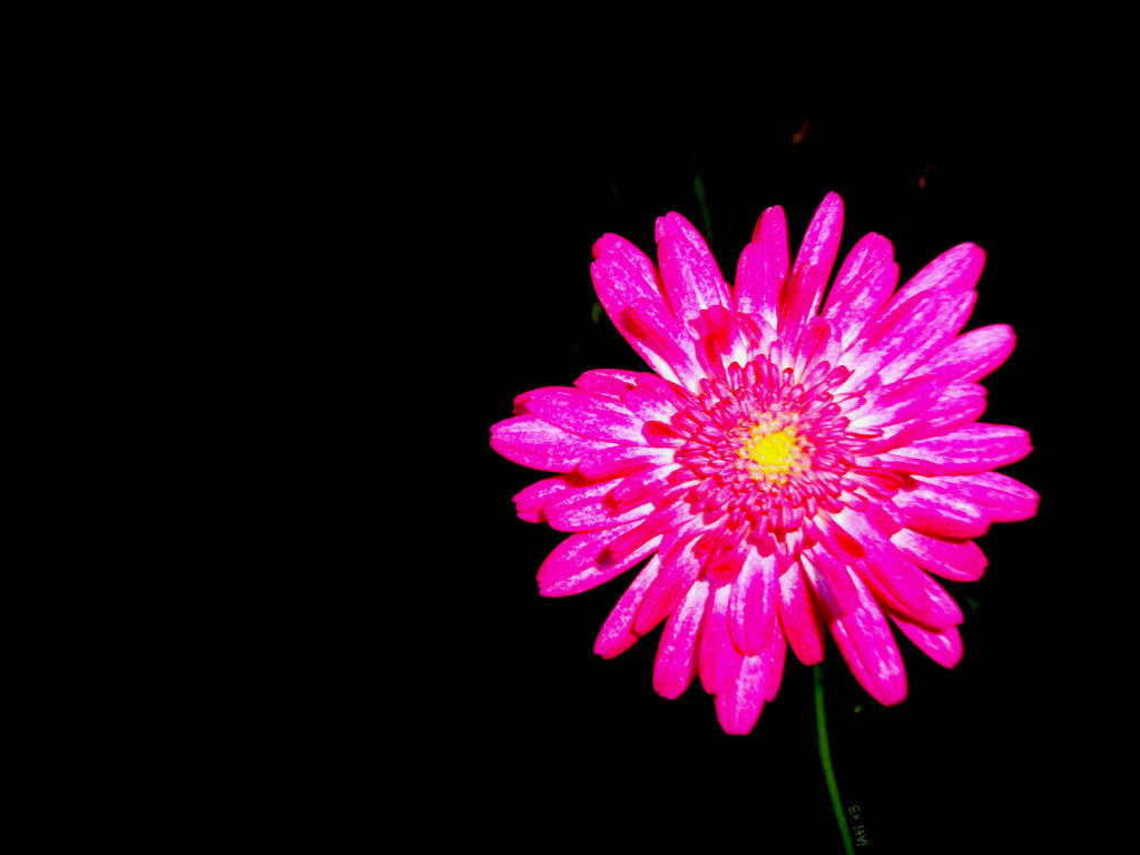 Hot pink flower by iatissam on deviantart hot pink flower by iatissam mightylinksfo