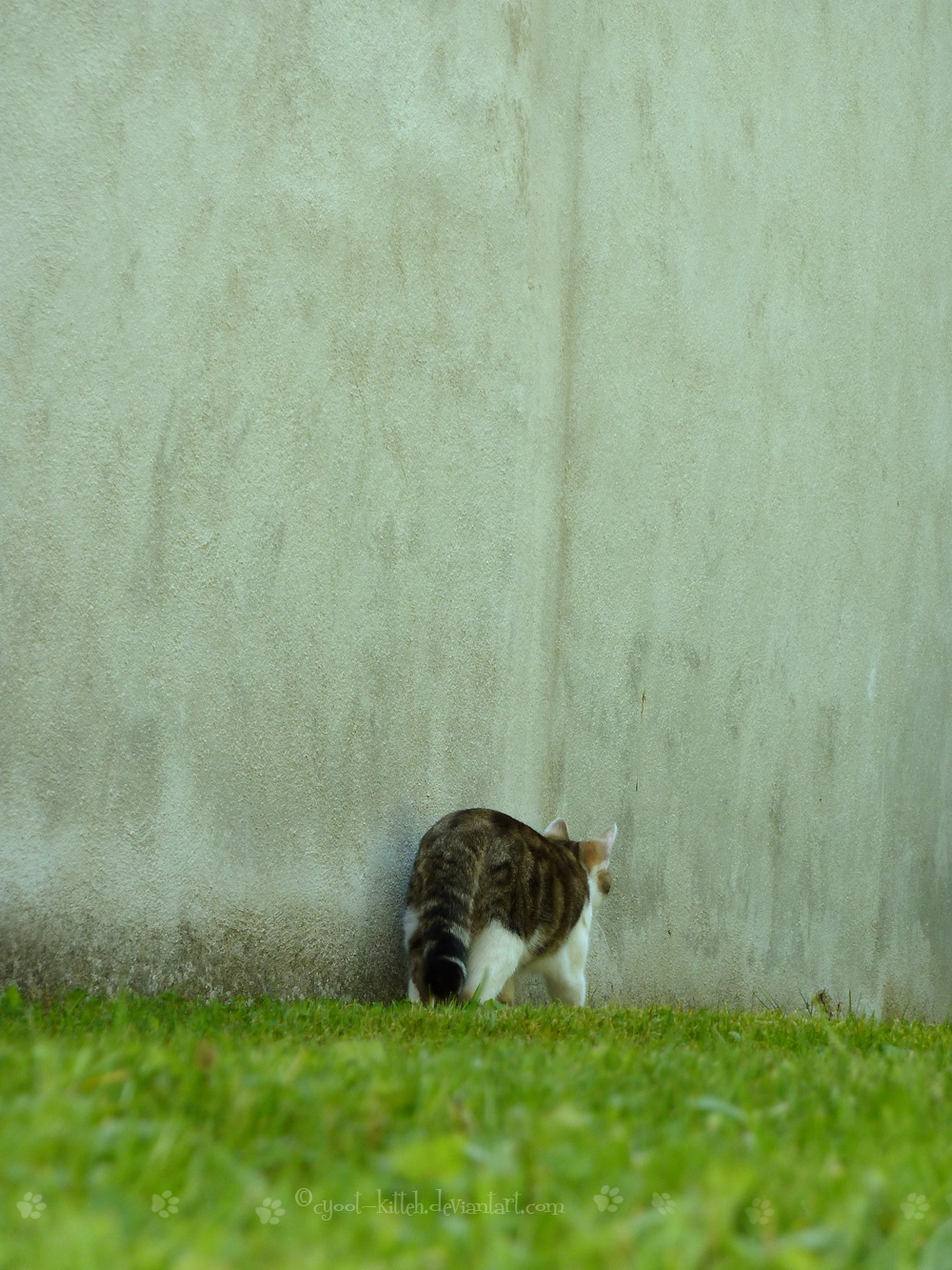 Nos bebêtes The_cat_who_walks_by_himself_by_cyoot_kitteh-d3dhuyq