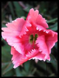 flower II by lostknightkg